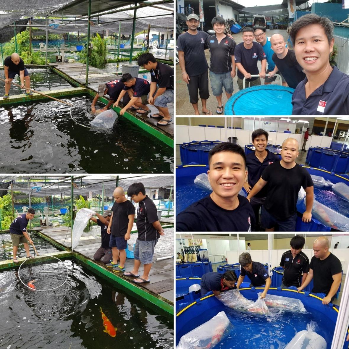Marugen Koi Farm Vietnam Singapore & Malaysia Attending Singapore Koi Show 2018